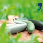 Urban Jungle: ga voor groen in huis!